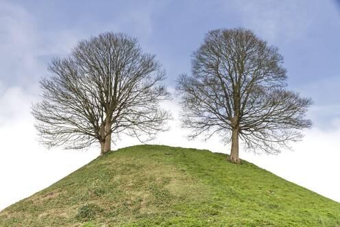Psychotherapie-Praxis Carola Krause mit Bäumen